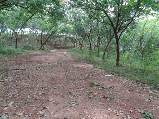 Pothencode Trivandrum Land for sale Pothencode Land Properties Sale
