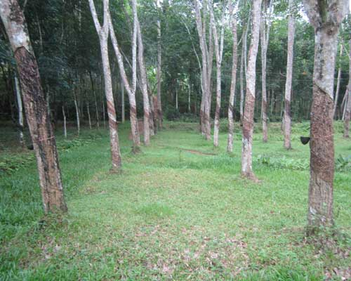 Rubber Land Sale at Neduvathoor Kottarakkara Kollam Kerala Kottarakkara Real Estate Kerala Properties